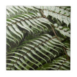 Fern Fronds II Dark Green Nature Ceramic Tile