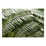 Fern Fronds II Dark Green Nature Photo Print
