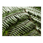 Fern Fronds II Dark Green Nature Postcard
