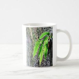 Fern, Fuerte San Lorenzo, Rio Chagres, Panama Classic White Coffee Mug