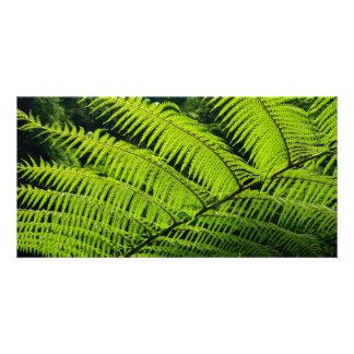Fern leaf photo card