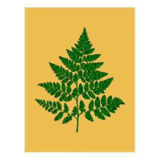 Fern leaf postcard