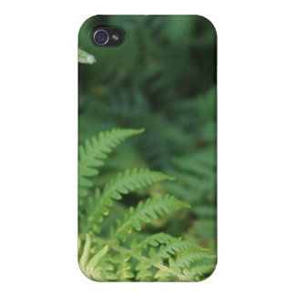 Fern Leaves. iPhone 4/4S Covers