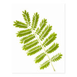 Fern leaves isolated postcard