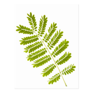 Fern leaves isolated postcard