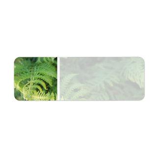 Fern Leaves. Label