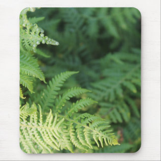 Fern Leaves. Mouse Pad
