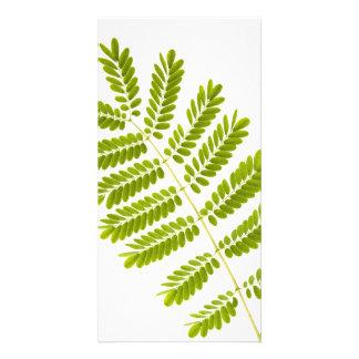 Fern leaves photo card