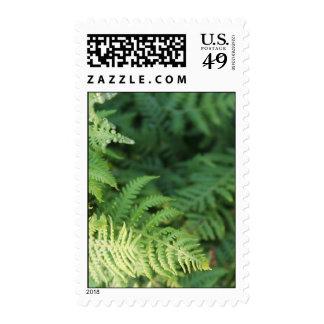 Fern Leaves. Stamp