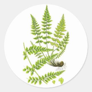 Fern No 6 Green Fern Plant Tropical Decor Classic Round Sticker