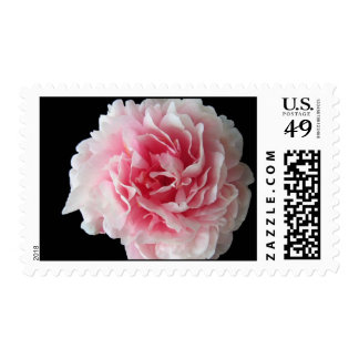 Fern Peony Postage Stamp