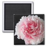 Fern Peony Square Magnet Refrigerator Magnet
