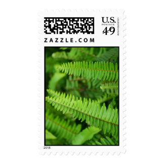 Fern Stamps