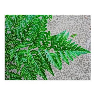 fern sideways sketch plant postcard