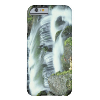 Fern Spring, Yosemite National Park Barely There iPhone 6 Case