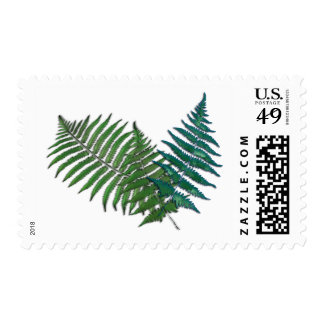 Fern Trio Postage Stamp