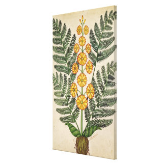 Fern with yellow flowers canvas print