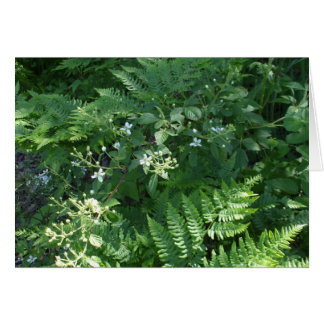 Ferns and Flowers -Blank Card