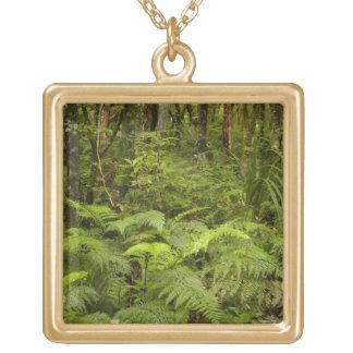 Ferns and native bush near Matai Falls, Catlins Necklace