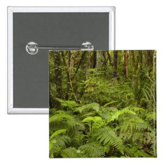 Ferns and native bush near Matai Falls, Catlins Pinback Button