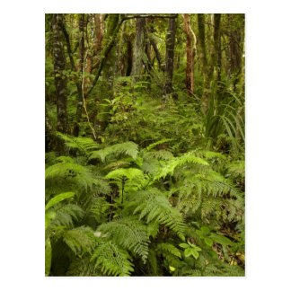Ferns and native bush near Matai Falls, Catlins Postcard
