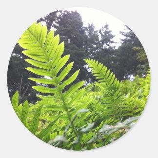Ferns at Angels Rest, Oregon Classic Round Sticker