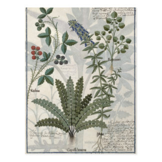 Ferns, Brambles and Flowers Post Card
