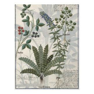 Ferns, Brambles and Flowers Postcard
