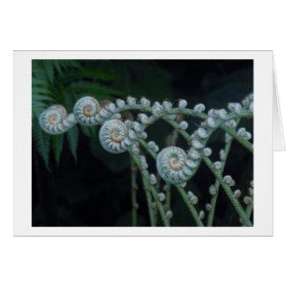 Ferns card