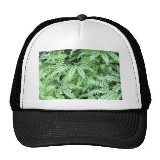 Ferns Close Up Trucker Hat