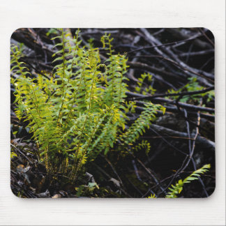 ferns-in-morning-light-2012-04-28 mouse pad