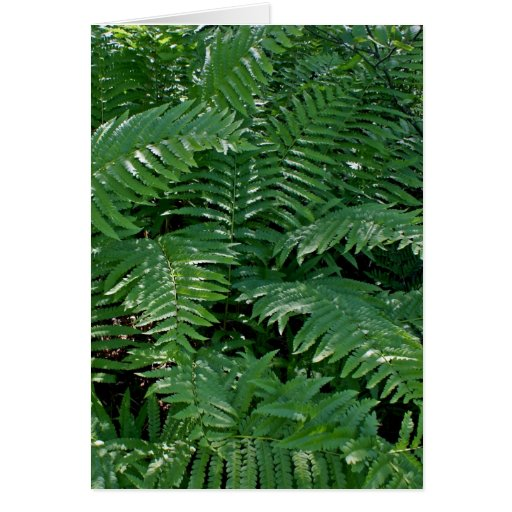 Ferns in the Forest Card