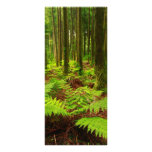 Ferns in the forest full color rack card