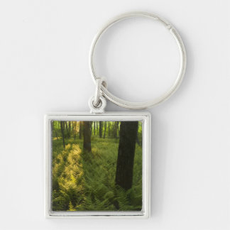 Ferns in the forest in Grafton, Massachusetts. Keychain