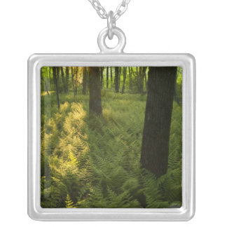 Ferns in the forest in Grafton, Massachusetts. Silver Plated Necklace