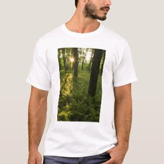 Ferns in the forest in Grafton, Massachusetts. T-Shirt