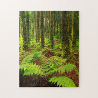 Ferns in the forest jigsaw puzzle