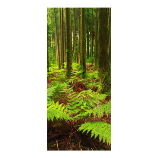Ferns in the forest rack card