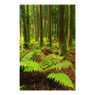 Ferns in the forest stationery