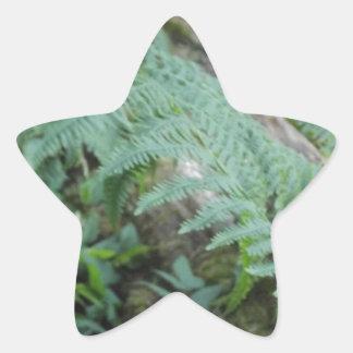 Ferns in the Forest Star Sticker