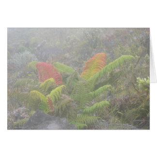 Ferns in the Mist - Haleakala, Maui Greeting Card