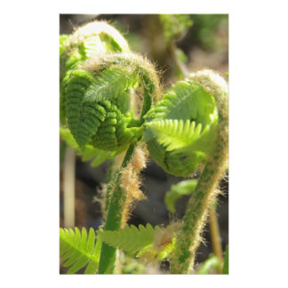 Ferns Just Waking Up in Spring Custom Stationery