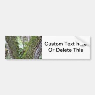 ferns live oak tree fork florida landscape scene bumper sticker