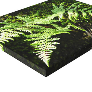 Ferns moss Stretched Canvas Print