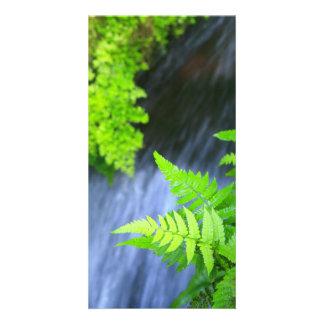 Ferns Photo Card