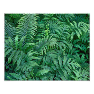 Ferns: Photo paper