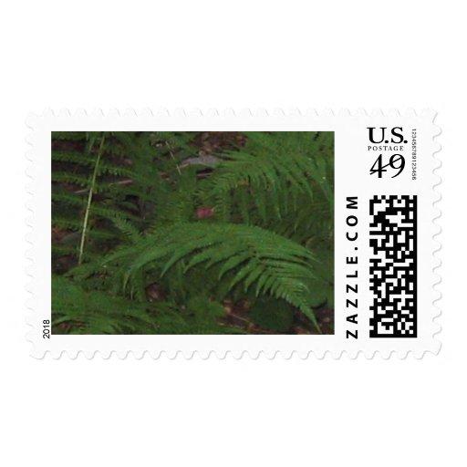 Ferns Postage Stamp