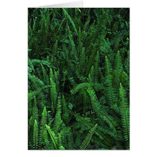 Ferns With Clover blank inside Card