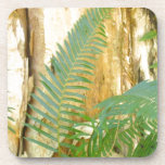 Ferny Forest Coasters