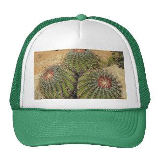 Ferocactus - cactus de barril gorra